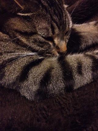 El tiempo justo para abrazar con el gatito ...