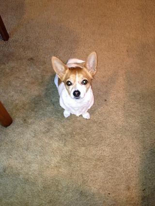 ¡Disfrutar! Su perro puede darle el ojo del hedor si usted no't share the shredded beef.