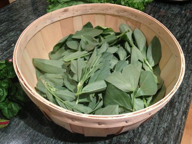 Las hojas serán de color verde oliva medio en color. Son un poco más grueso que las espinacas y tienen un sabor similar a brotes de guisantes.