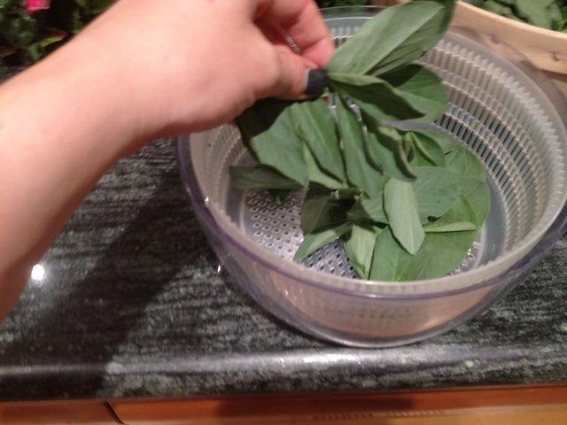 Retire los tallos de las hojas de fava, y deseche los residuos.