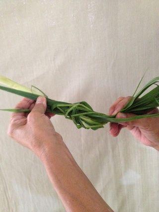 Ate la hierba de limón para un manejo más fácil