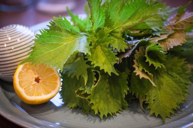 Shiso fresca desde el jardín. Puede sustituir hierbabuena o albahaca.
