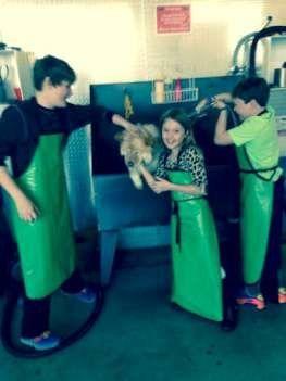 Cómo hacer casera champú para perros