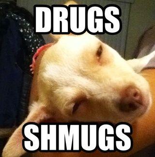 Después de su hecho con eso, sólo tienes que guardar la foto. Por cierto mi perro estaba cansado, nada serio ha.