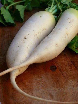 Daikon rábano & lt; 3 * zanahoria y rábano imágenes tomadas de los Interwebs -)