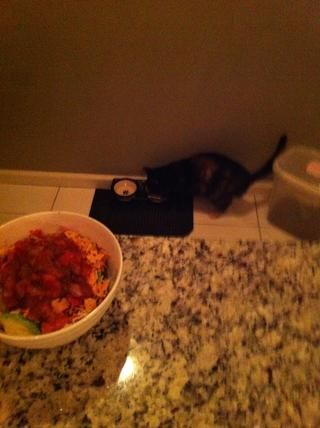 Don't forget to feed the cat too, before chowing down! Experiment with other toppings-- tabasco, sour cream, etc.