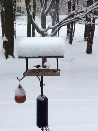 Cuida tu alimentación de aves y esperar a que la plancha de gofres emita un pitido.
