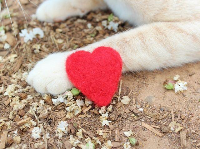 Cómo hacer que la aguja Juguetes para gatos Felted Con Catnip Orgánica