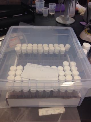 Almacenamos los viales en un contenedor Tupperware ya que nos lleva a unos 3-7 días para usarlos. Yo recomendaría el almacenamiento de botellas y frascos a 4 ° C, pero el proceso de condensación a RT podría dar lugar a las bacterias.