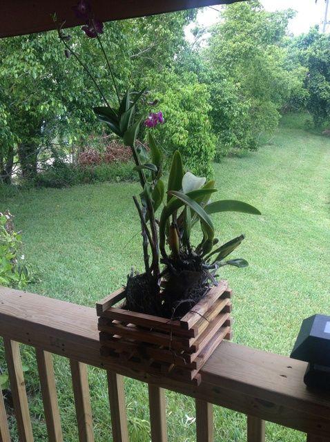 Cómo hacer Orchid jardineras por menos de $ 4 a pieza