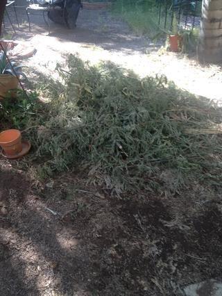 Tenemos que limpiar todo esto escombros de la planta