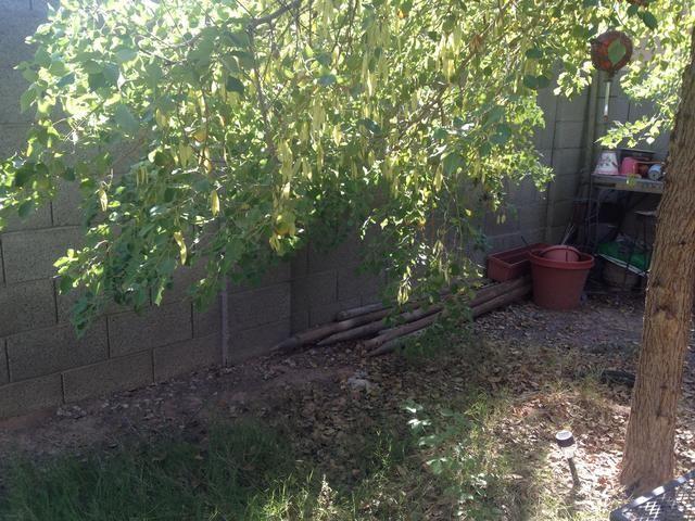 Ramas de los árboles necesitan ser cortados. Ellos están colgando demasiado cerca del suelo.