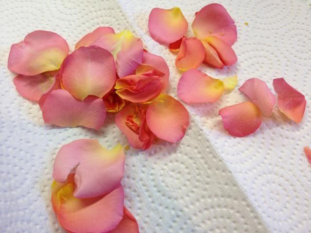 Comience por depilarse todos los pétalos de una rosa que se está en flor. Me encanta el color aquí!
