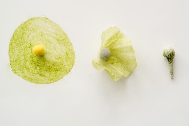 Tome la pieza círculo y envolver y girar alrededor de un pom pom o poco de algodón. Este será el centro de la flor.