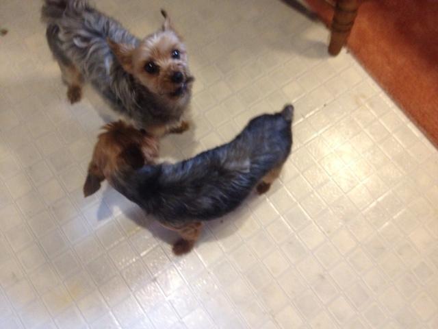 Los cachorros están a la espera de algo para caer ...