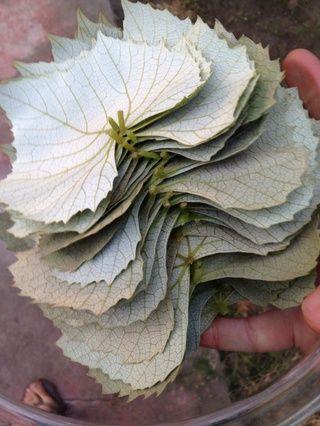 Usted necesitará alrededor de 10 a 15 hojas por persona.