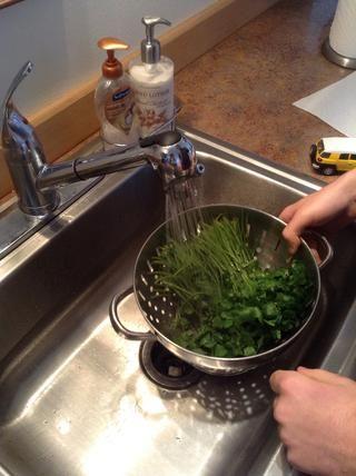 Lavar el cilantro en el fregadero