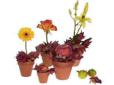 Inserte una sola floración o fruta en las hojas de belleza instantánea. Cluster o de dispersión en toda la casa o de la mesa para una mirada festiva. Incluso añadir nombres a las pequeñas macetas para ajustes lugares.