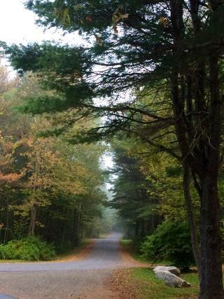 Esta guía fue fotografiado y se preparó en la hermosa, Hills Creek State Park, Pennsylvania, principios del otoño de 2015. Gracias por tomarse el tiempo para ver otro de mis guías! Disfrutar ! ?????? ❤️