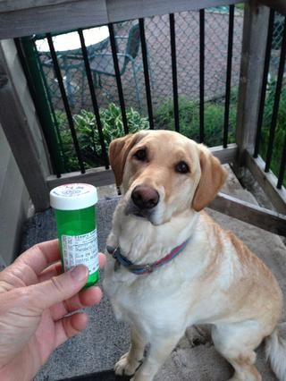 Esta es la mejor manera que've found to give Molly pills without forcing her... And she loves it.