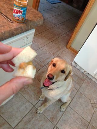 Doblar la tira de pan, lo que permite la mantequilla de cacahuete para actuar como una especie de