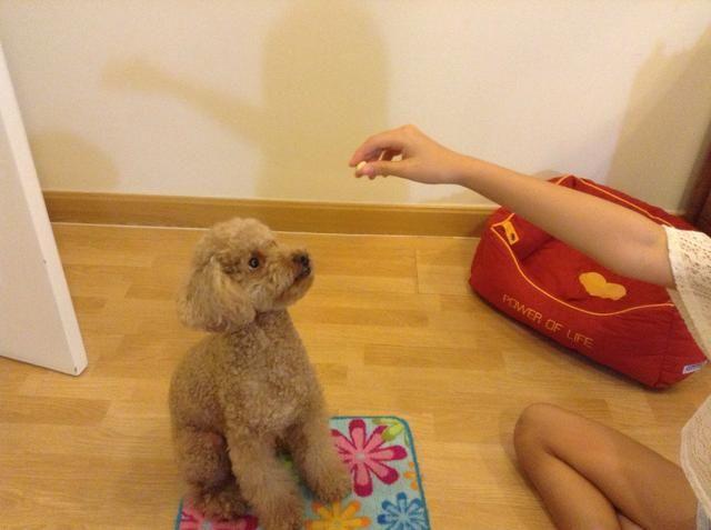 Lleve su mano encima de la cabeza de los perros y al hacer que decir SIT. Y asegúrese de que el perro está mirando el convite.