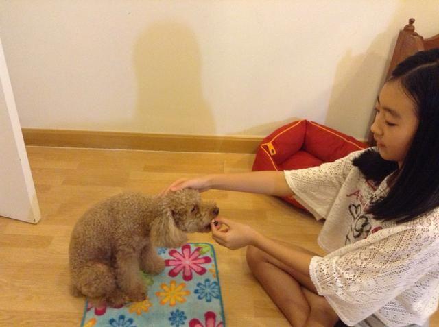 Luego, después de que haya terminado con todos esos pasos, dar el tratamiento que estaba en su mano para que el perro. Al mismo tiempo que el convite, palmaditas en su / su cabeza y decir buen chico o chica buena.