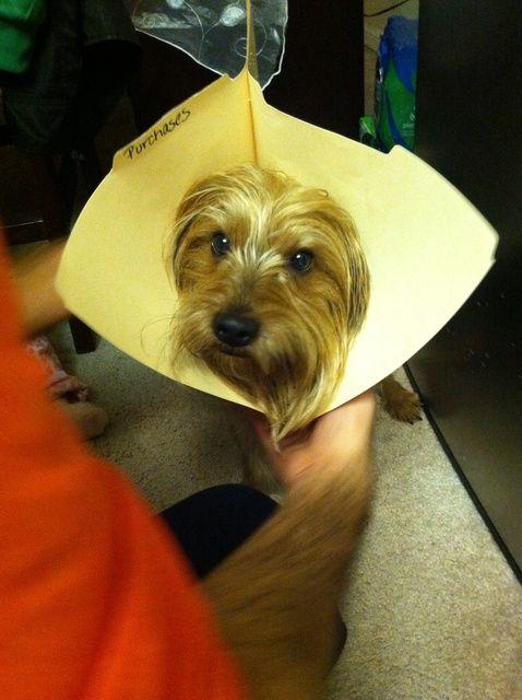 Cómo hacer tu propio collar de perro en casa en cualquier momento!
