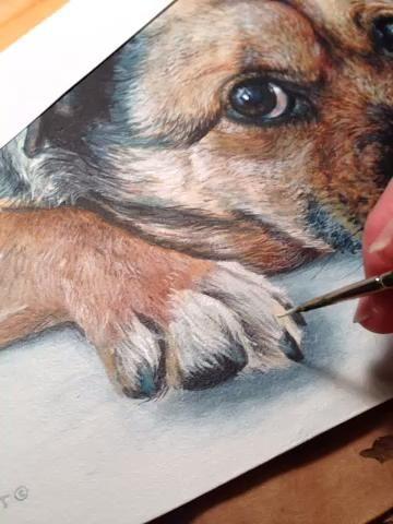 Estudio de detalle cuando pinto. Nunca lo haría've noticed this much fur between a dog's paws.