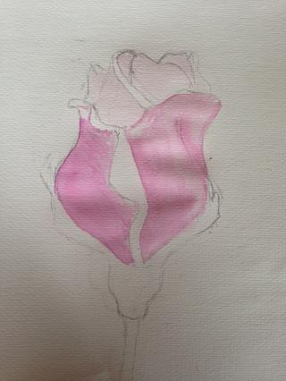 Siguiente bloque en sus secciones con un color rosado básico, mantener esta luz.