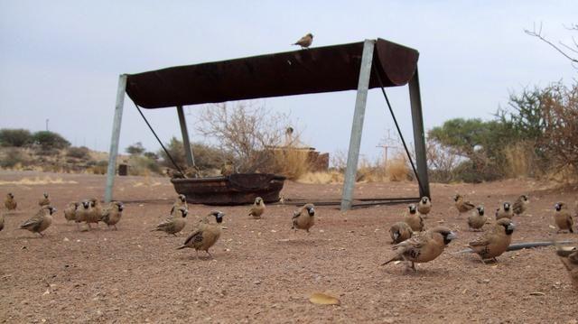 Ah, y compartir su desayuno con los pájaros
