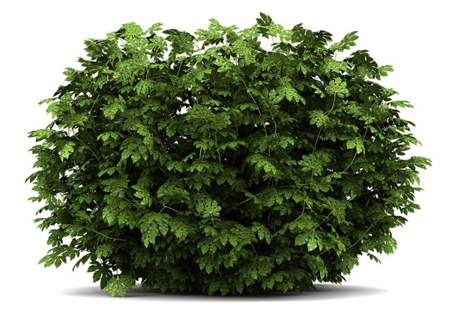 Fotografía - Cómo: Planta un Bush