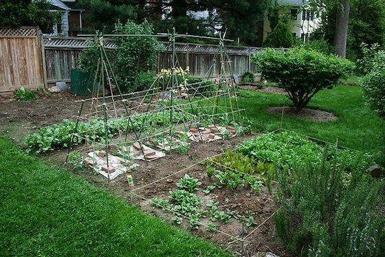 Cómo plantar un jardín vegetal - Disposición