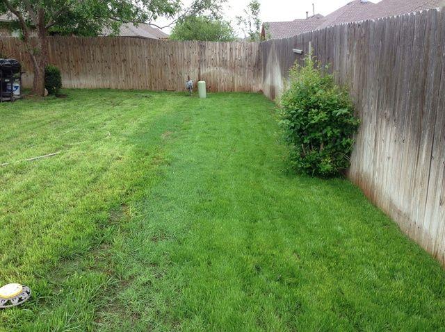 Cómo plantar semilla de festuca hierba
