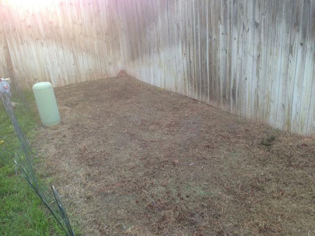 Despeje el área que usted está queriendo sembrar. Se puede hacer cortando el ajuste más bajo.