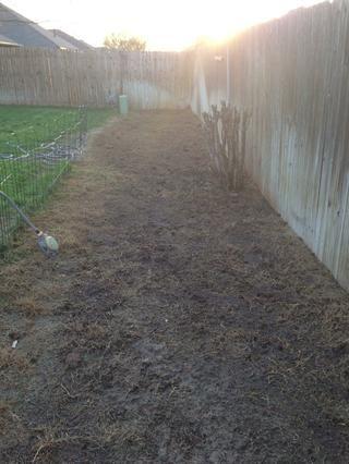 Añadir semilla extendiéndolo uniformemente sobre el área elegida. Cubra ligeramente con la parte superior del suelo. Agua usando área pequeña regadera durante 4 minutos. Gire rociadores hasta que toda el área se ha diluido.