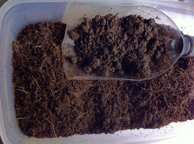 Mezclar el polvo de coco y vermicast / vermicompost a cantidades iguales o cuarto vermicast y 3/4 de coco turba.
