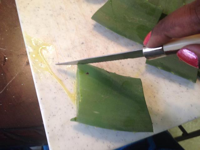 Cortar los lados espinosos fuera de la hoja de aloe