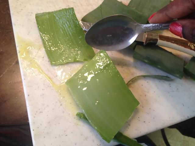 aquí's where things start to get messy. Taking your spoon, scrape the meat off of the bottom of the aloe leaf.