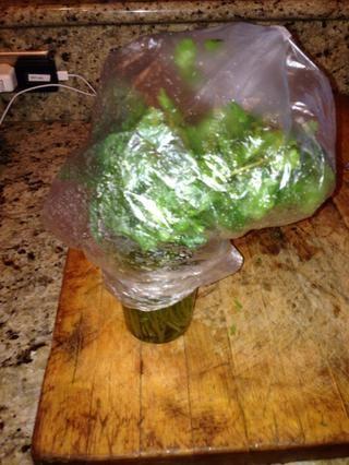 Cubra el cilantro ligeramente con la bolsa de plástico y envolver la parte inferior de la bolsa alrededor de la taza. Guarde en el refrigerador.