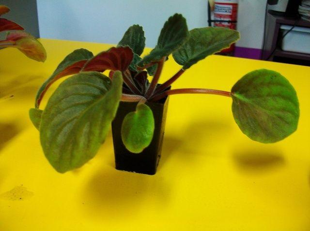 Fotografía - Cómo propagar plantas
