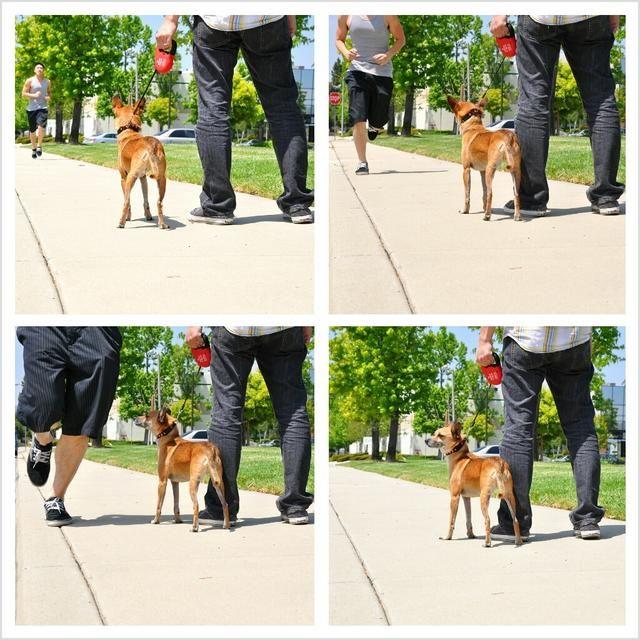 Si usted piensa que su perro puede encontrarse con una situación de peligro, mantener a su perro cerca de su lado con el freno pisado y la correa extendido a solamente un tramo corto.