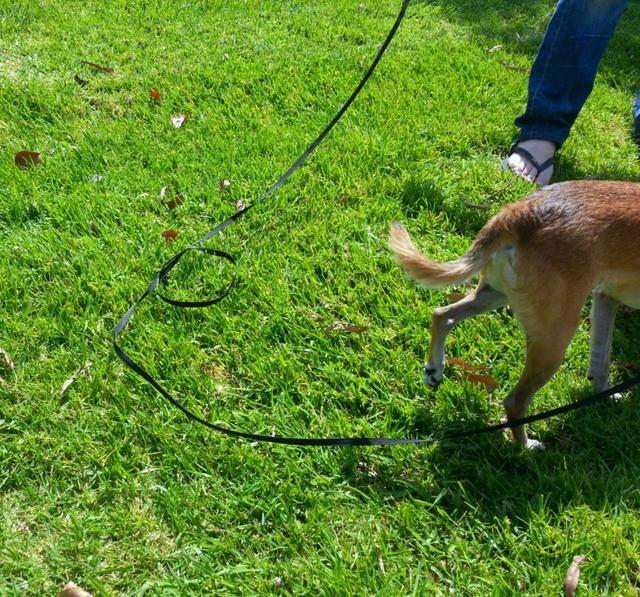NO le dé la correa demasiada holgura. Esto podría dañar a usted y su perro de ellos deciden salir corriendo a alguna parte!