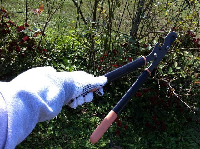 Reúna herramienta de poda, guantes y mangas largas! Esas espinas bite..OUCH! ??????
