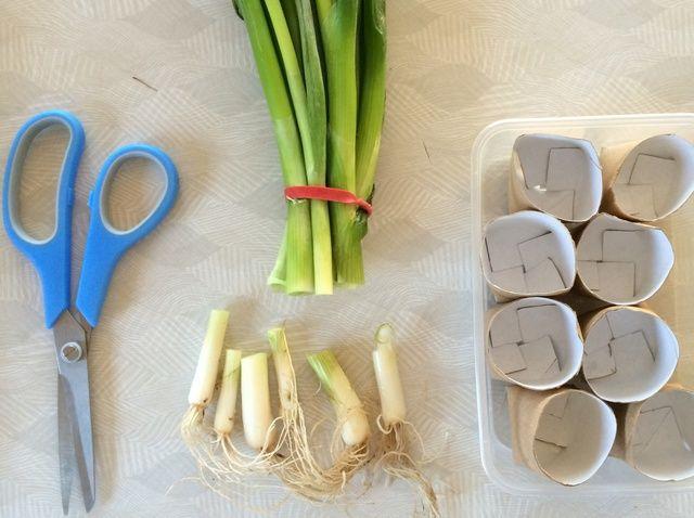 Fotografía - Cómo volver a crecer cebollas de primavera en el supermercado