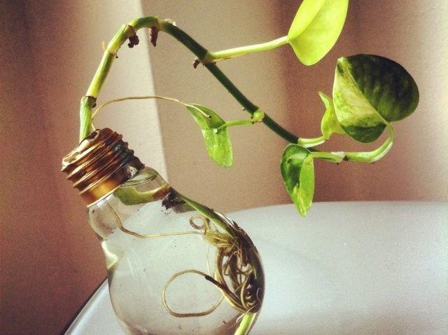 Cómo Reciclar y Reutilizar una bombilla