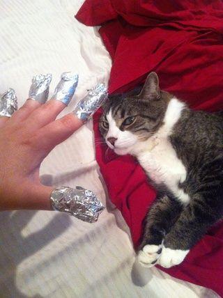 ... como molestar a su gato ....