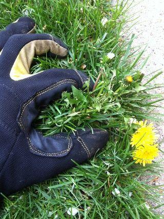 Aislar el cepellón de la hierba que rodea tanto como sea posible.