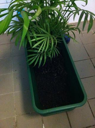 Colóquelo en la que desea en la olla y llenarlo hasta las raíces con la mezcla de tierra ... ahora hacer lo mismo con el resto de las plantas