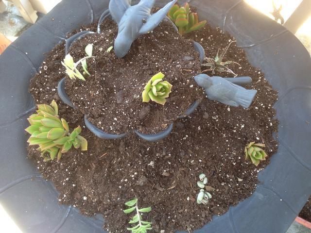 Rellenar con sus plantas de elección. Escoja plantas con raíces poco profundas, las suculentas son excelentes para esto.